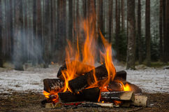 Fire in the winter forest Royalty Free Stock Image