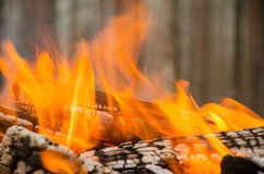 Fire in the winter forest Stock Photography
