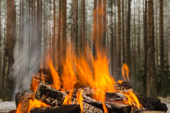 Fire in the winter forest Stock Photos