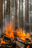 Fire in the winter forest Royalty Free Stock Photos