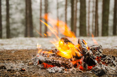 Fire in the winter forest Stock Photo