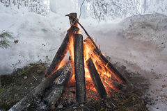 A fire on a winter forest edge Royalty Free Stock Image