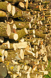 Fire-wood Stock Images