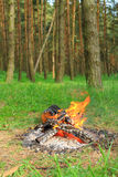 Fire in the wood Stock Images