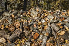 Fire-wood for camp fire at morning forest Royalty Free Stock Photos