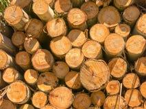 Fire wood eucalyptus texture Royalty Free Stock Photography