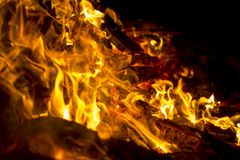 Fire wood in a flame Stock Image