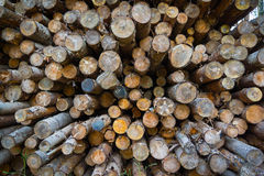 Fire Wood In The Stack Royalty Free Stock Photo