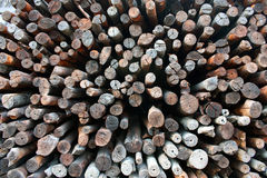 Fire wood from mangrove Stock Photos