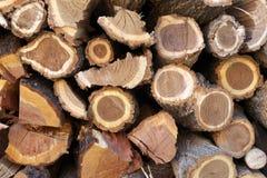 Fire wood 2. Maple, walnut, apple, wild cherry fire wood Royalty Free Stock Photo