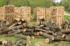 Fire wood pallets Stock Photo