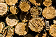 Fire Wood. A pile of fire wood, close up Stock Image
