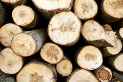 Fire wood stack Stock Images
