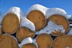 Fire wood under snow Stock Photography