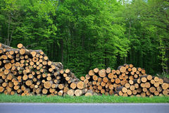 Fire woods at edge of forest Stock Photography