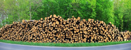 Fire woods at edge of forest Royalty Free Stock Photo