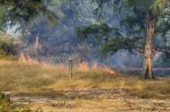 Fire in the woods Stock Photography