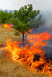 Fire in the woods on a hot summer day. Drought. Royalty Free Stock Photography