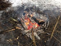 Fire in the Woods. Stock Image