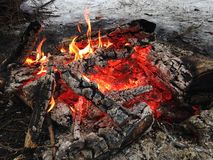 Fire in the Woods. Stock Images