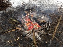 Fire in the Woods. Stock Photography