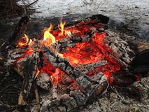 Fire in the Woods. Royalty Free Stock Image