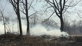 Fire in the woods with a strong smoke. The Fire in the woods with a strong smoke stock footage