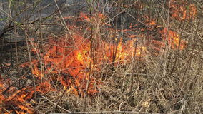 Fire in the woods with a strong smoke. The Fire in the woods with a strong smoke stock video