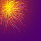 Fire Works Burst in the sky at night. Violet sky Stock Image