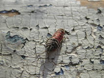 firebug Стоковое фото RF