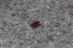 Firebug Stock Images