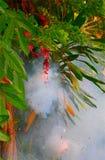 Firecracker Στοκ εικόνα με δικαίωμα ελεύθερης χρήσης