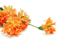 Firecracker flower Stock Photo