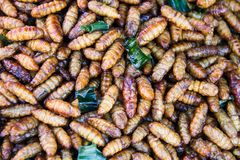 Fired silk worm as snack in  Asia countries Royalty Free Stock Photography