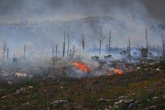 firefield Στοκ εικόνες με δικαίωμα ελεύθερης χρήσης