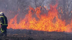 Firefighter Runs through Burning Forest. Burnt trees, charred trees. Slow motion