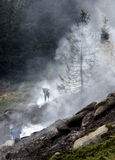 Firefighters extinguishin forest fire Stock Photos
