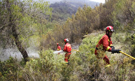 Firefighters on forest Stock Photography