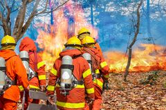 Firefighters preparing equipment in forest royalty free stock photo