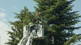 Firefighters Preparing to Cut Spruce Branches royalty free stock photos
