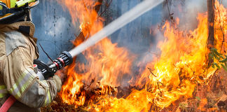 Firefighters spray water to wildfire. In forest royalty free stock image