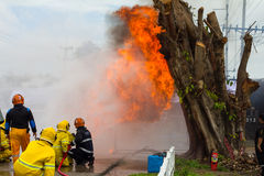 Firefighters train near the stump. Royalty Free Stock Photos
