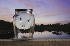 fireflies ηλιοβασίλεμα στοκ εικόνες με δικαίωμα ελεύθερης χρήσης