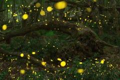 Fireflies το καλοκαίρι στο δάσος νεράιδων Στοκ φωτογραφίες με δικαίωμα ελεύθερης χρήσης