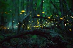 Fireflies το καλοκαίρι Στοκ εικόνες με δικαίωμα ελεύθερης χρήσης