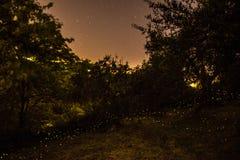 fireflies Arkivbilder