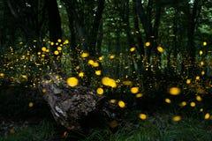fireflies Arkivfoton