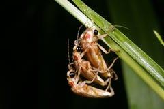 fireflies Στοκ Εικόνες