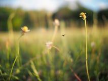 Fireflies Royalty Free Stock Photos
