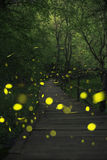 Fireflies in a fairy forest. Wooden bridge in a forest. Ropotamo, Bulgaria Royalty Free Stock Images